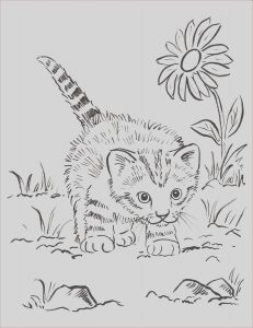 Kitty Cat Coloring Pages Beautiful Images Kitten Coloring Page Samantha Bell