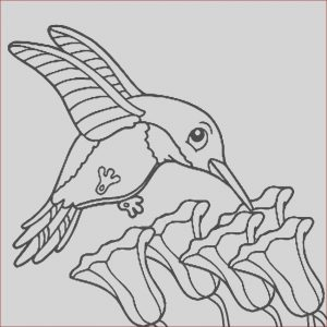 Printable Hummingbird Coloring Pages Awesome Collection Printable Hummingbird Coloring Pages for Kids