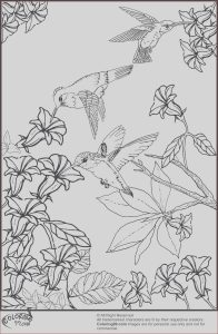 Printable Hummingbird Coloring Pages Awesome Collection September 2013