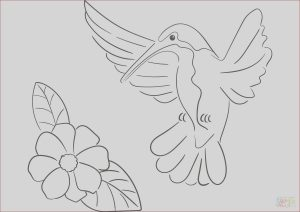Printable Hummingbird Coloring Pages Cool Photos Hummingbird Coloring Page