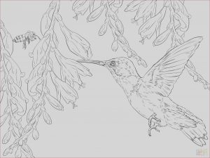 Printable Hummingbird Coloring Pages New Photos Hummingbird Coloring Pages Printable at Getcolorings