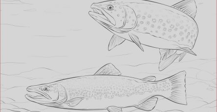 Trout Coloring Page Beautiful Photos Brown Trout Coloring Page