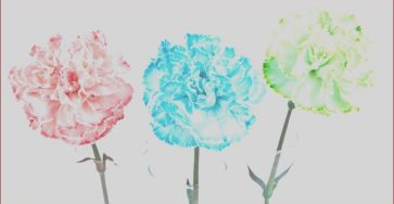 Food Coloring Flowers Luxury Photos Food Color Flowers Experiment Science In Full Bloom
